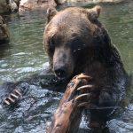 夫婦で登山&トレッキング!シーズン前に熊のことを知っておこう!