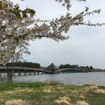 弘前の桜&鶴の舞橋、夫婦で観光
